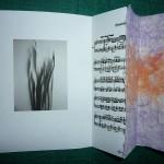 Gladioli Rug Book Arts