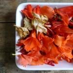 Glagioli Petals for plant paper