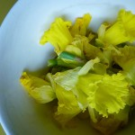 Daffodils ready for processing for handmade paper inclusion